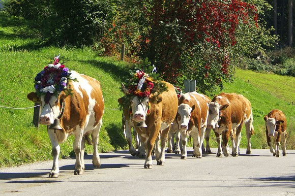 Bauernherbst - Salzburger Land